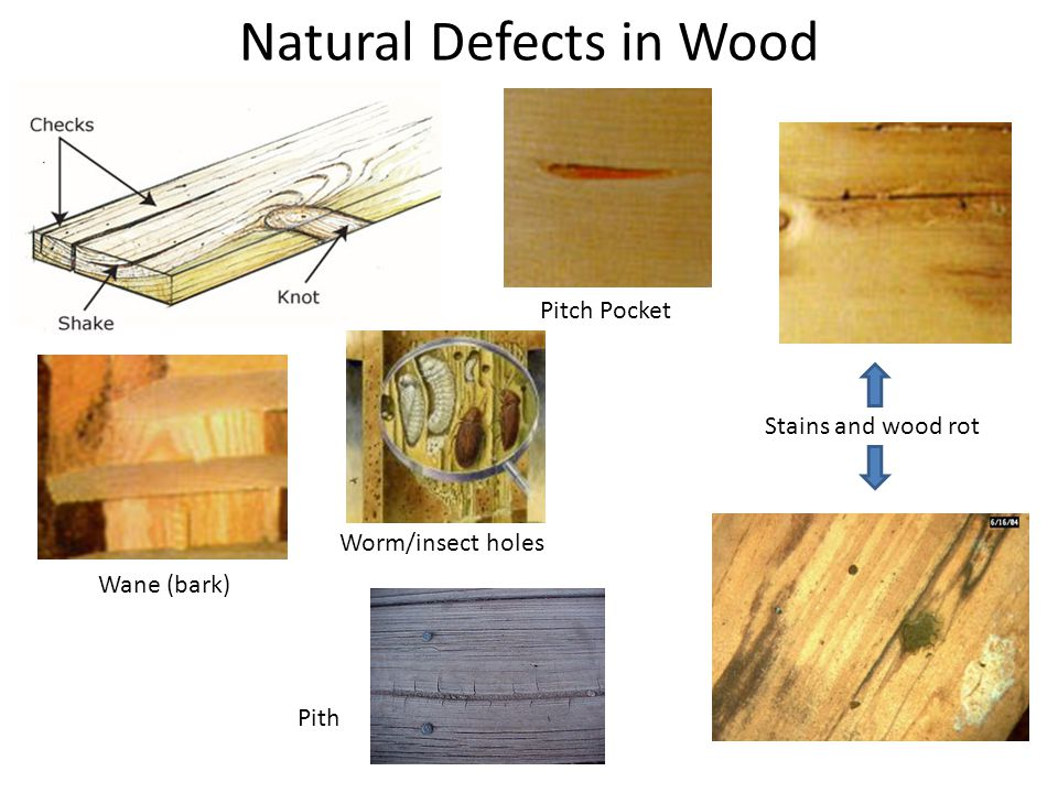 Natural Defects in Wood Pitch Pocket Wane (bark) Stains and wood rot Worm/insect holes Pith