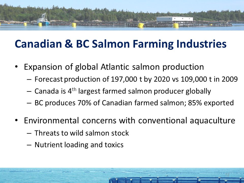 Canadian & BC Salmon Farming Industries Expansion of global Atlantic salmon production – Forecast production of 197,000 t by 2020 vs 109,000 t in 2009