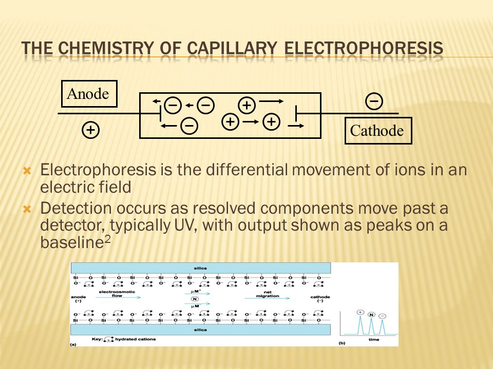 Electrophoresis is the differential movement of ions in an electric field  Detection occurs as resolved components move past a detector, typically UV, with output shown as peaks on a baseline 2 Anode Cathode