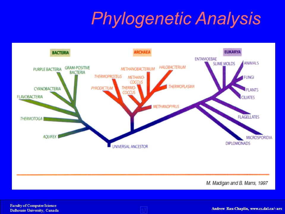 Faculty of Computer Science Dalhousie University, Canada Andrew Rau-Chaplin, www.cs.dal.ca/~arc Phylogenetic Analysis