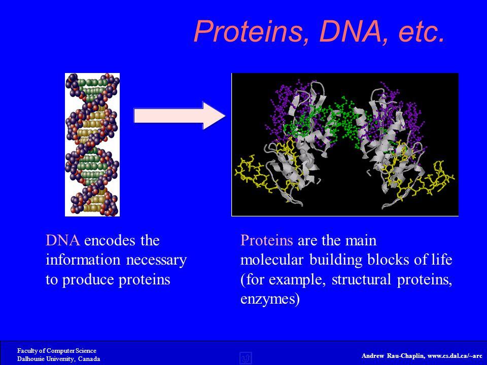 Faculty of Computer Science Dalhousie University, Canada Andrew Rau-Chaplin, www.cs.dal.ca/~arc Proteins, DNA, etc.