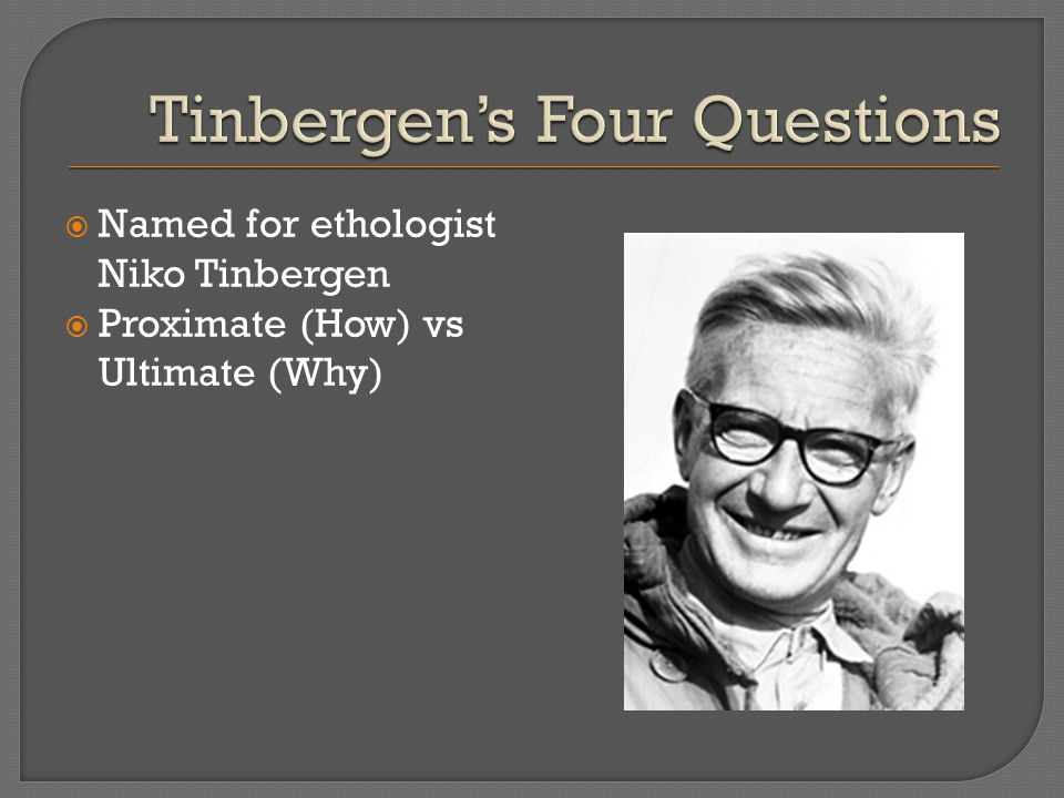  Named for ethologist Niko Tinbergen  Proximate (How) vs Ultimate (Why)