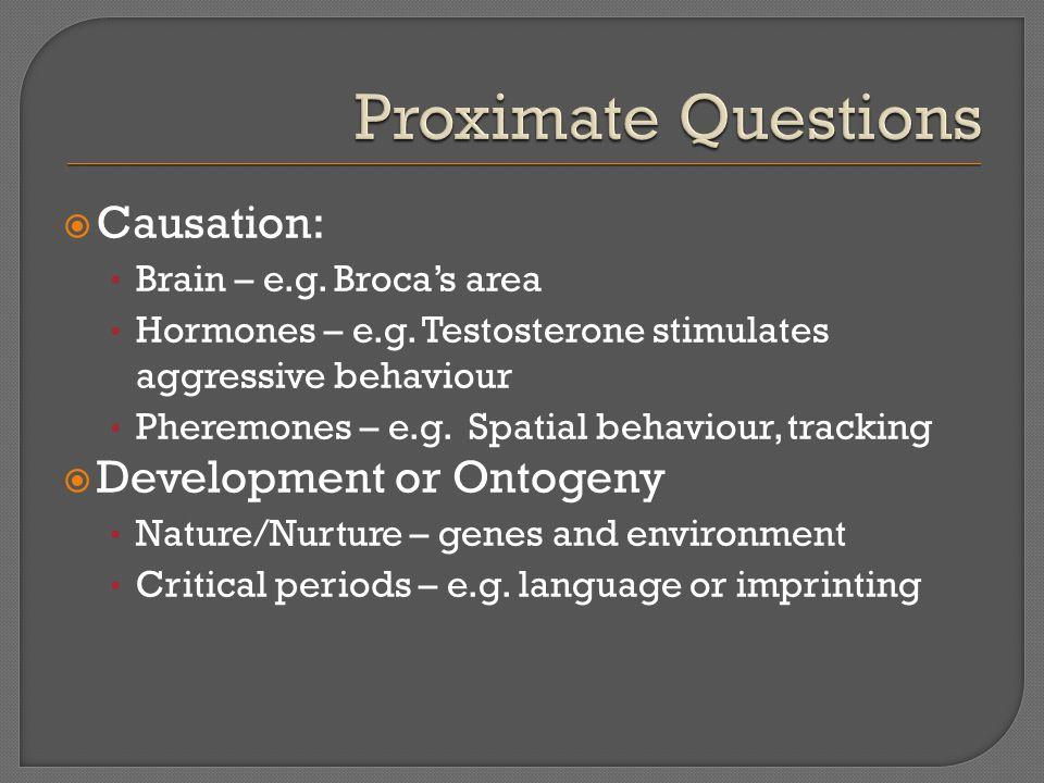  Causation: Brain – e.g. Broca's area Hormones – e.g.