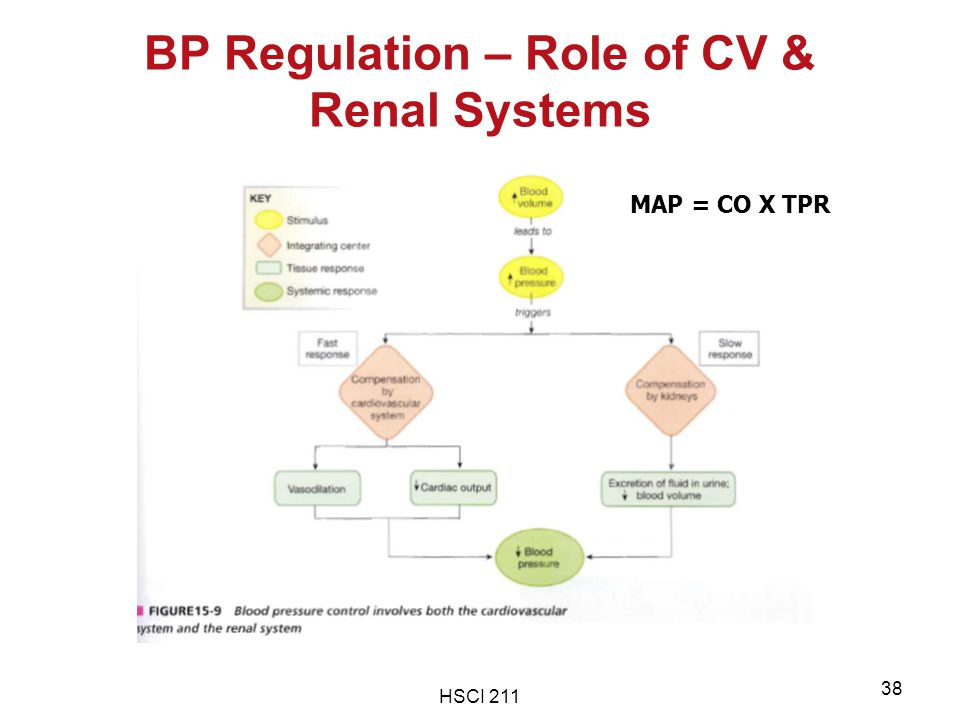 HSCI 211 38 BP Regulation – Role of CV & Renal Systems MAP = CO X TPR