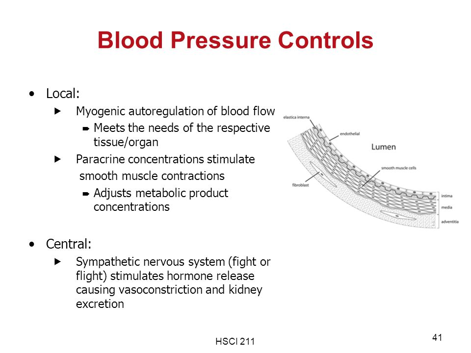 HSCI 211 41 Blood Pressure Controls Local:  Myogenic autoregulation of blood flow  Meets the needs of the respective tissue/organ  Paracrine concen