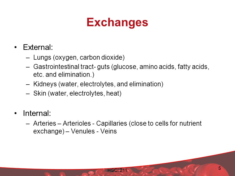 HSCI 211 5 Exchanges External: –Lungs (oxygen, carbon dioxide) –Gastrointestinal tract- guts (glucose, amino acids, fatty acids, etc. and elimination.
