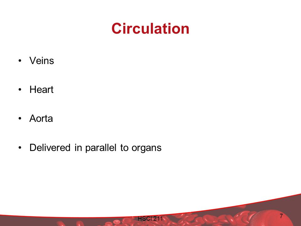 HSCI 211 7 Circulation Veins Heart Aorta Delivered in parallel to organs