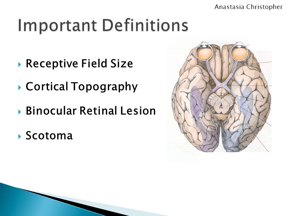  Receptive Field Size  Cortical Topography  Binocular Retinal Lesion  Scotoma Anastasia Christopher
