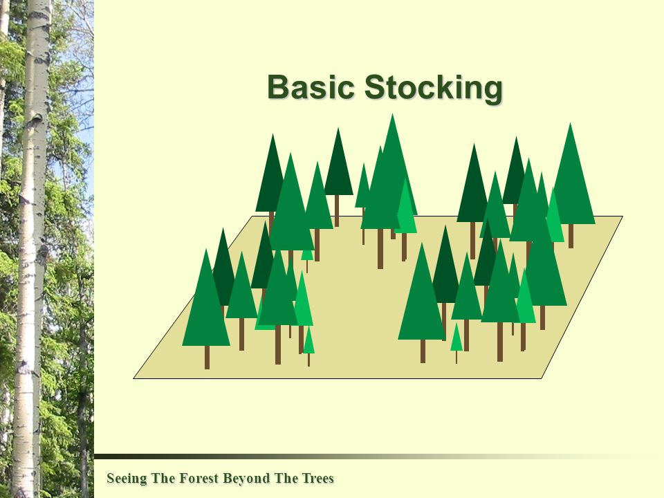 Seeing The Forest Beyond The Trees Basic Stocking