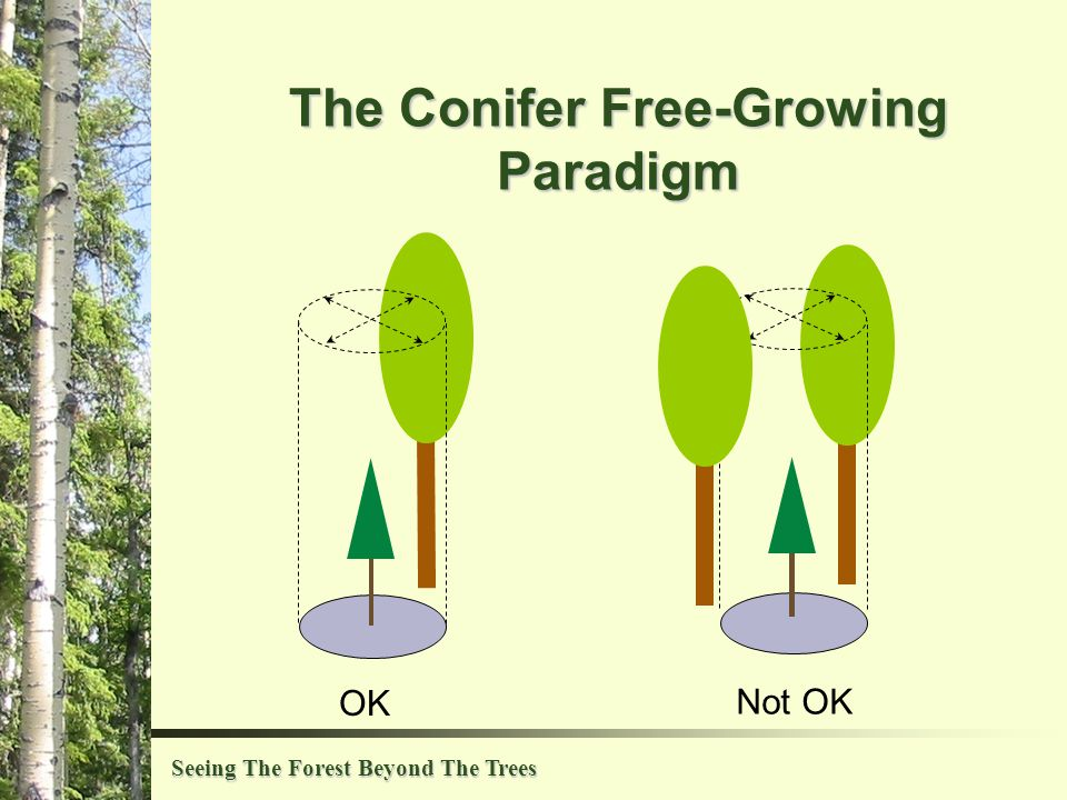 Seeing The Forest Beyond The Trees The Conifer Free-Growing Paradigm OK Not OK
