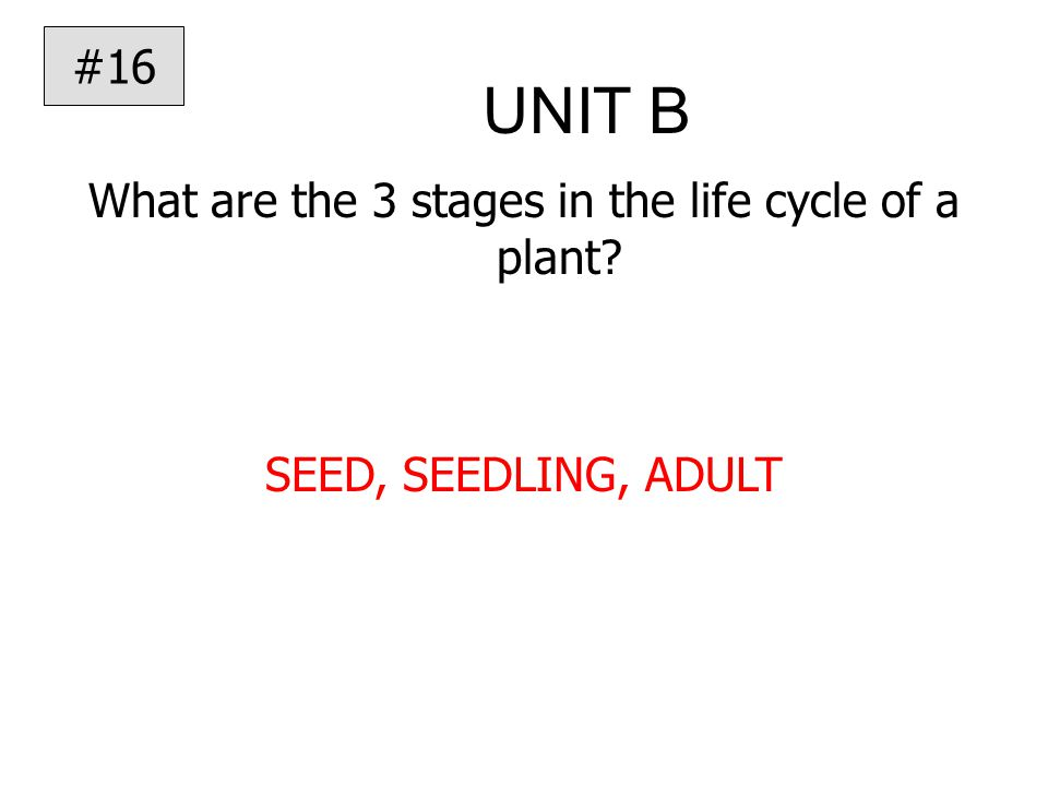 UNIT B What are the 3 stages in the life cycle of a plant SEED, SEEDLING, ADULT #16