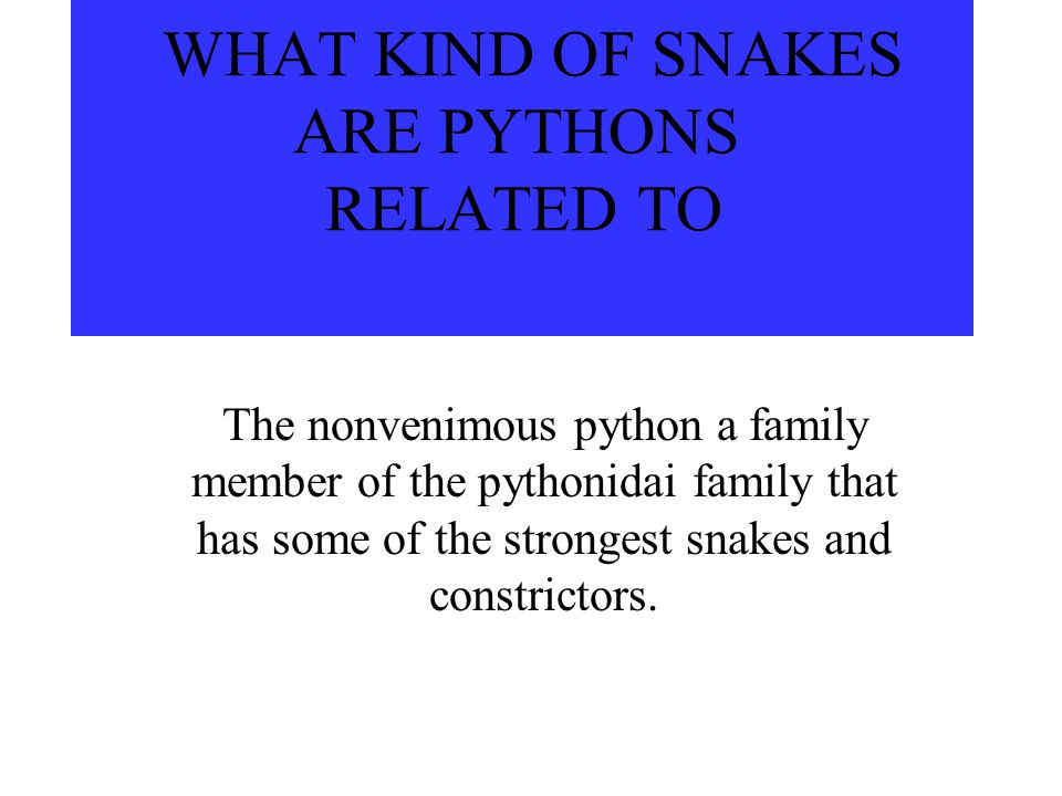 WHAT KIND OF SNAKES ARE PYTHONS RELATED TO The nonvenimous python a family member of the pythonidai family that has some of the strongest snakes and constrictors.