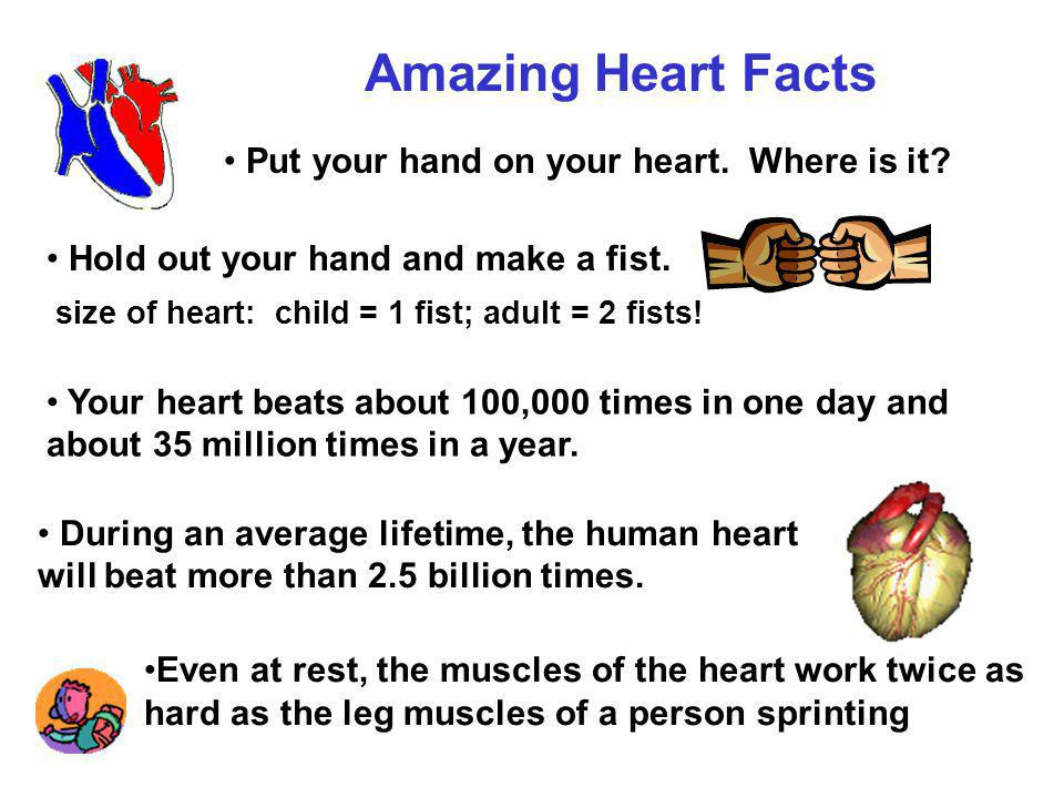 Amazing Heart Facts Put your hand on your heart.Where is it.
