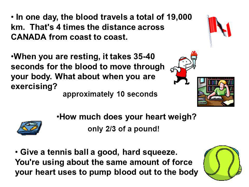 In one day, the blood travels a total of 19,000 km.