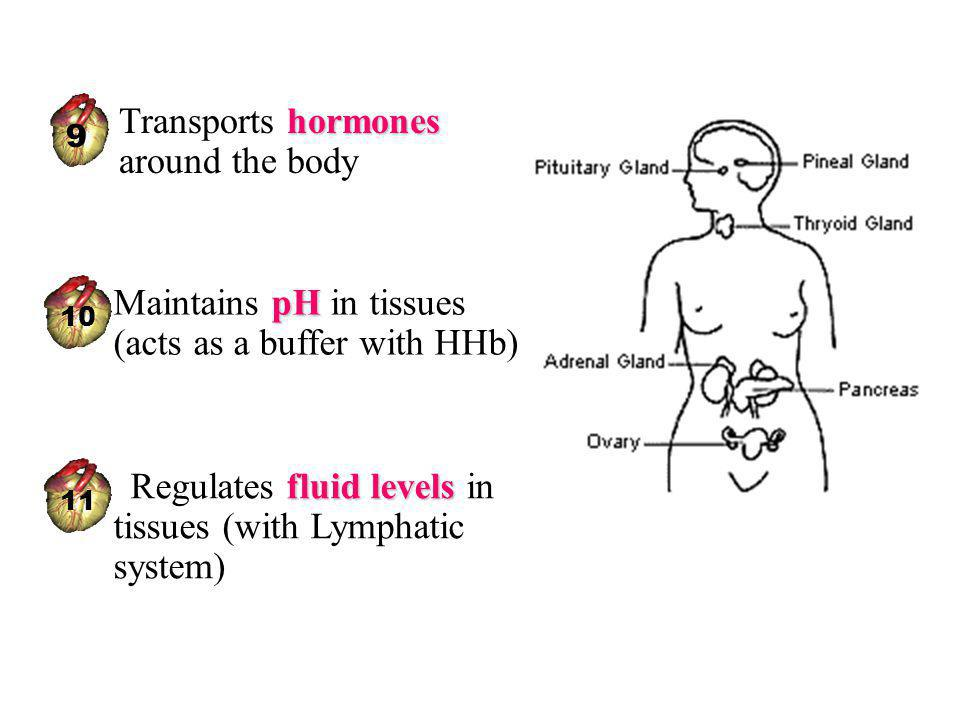 pHMaintains pH in tissues (acts as a buffer with HHb) 10 fluid levels Regulates fluid levels in tissues (with Lymphatic system) 11 hormonesTransports hormones around the body 9