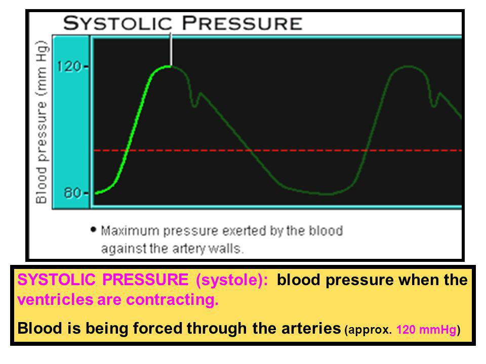 70 mL BLOOD PRESSURE: the ventricles pump approx. 70 mL of blood each time they contract. stopping and starting arteries The pulse you feel is blood s