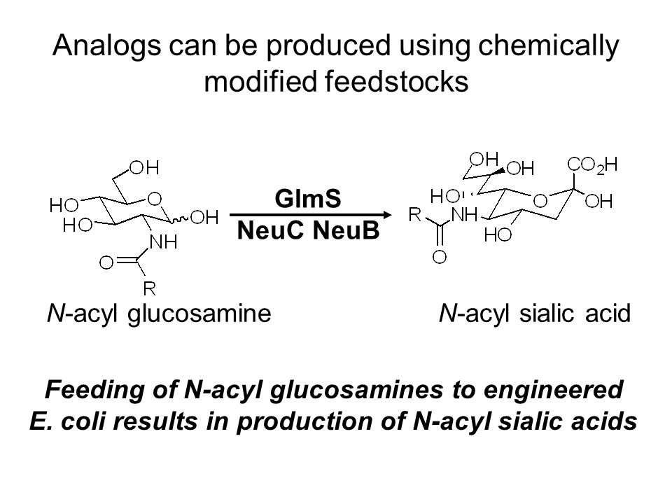 Analogs can be produced using chemically modified feedstocks N-acyl glucosamineN-acyl sialic acid GlmS NeuC NeuB Feeding of N-acyl glucosamines to engineered E.