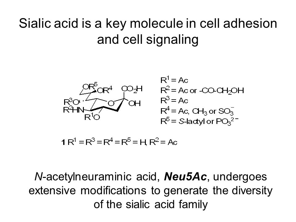 Sialic acid encompasses a large family of cell-surface carbohydrates Biological Function Cell Adhesion Cell Signaling Glycoprotein Stability Bacterial Virulence Tumor Metastasis Medical Importance Influenza Inhibitors Marker for Disorders Biologics Diagnostics Limited supply of sialic acid analogs has hindered advancement in basic research, diagnostic development and therapeutic production