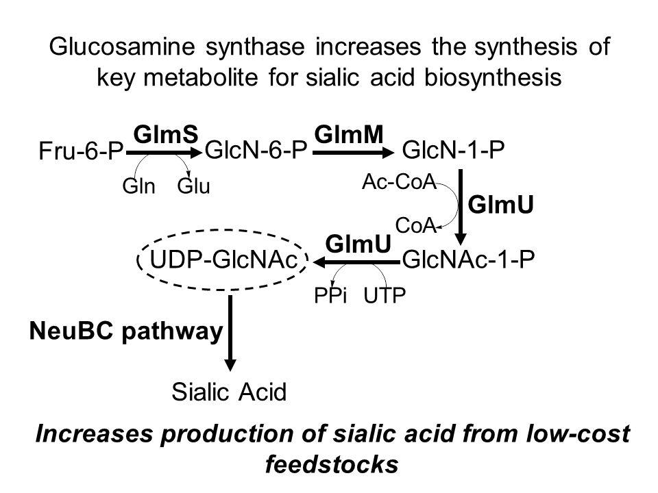 Sialic acid production by genetically & metabolically engineered E. coli