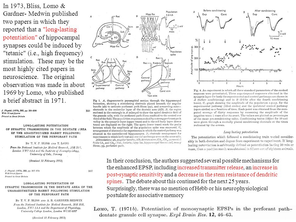 In 1973, Bliss, Lomo & Gardner- Medwin published two papers in which they reported that a