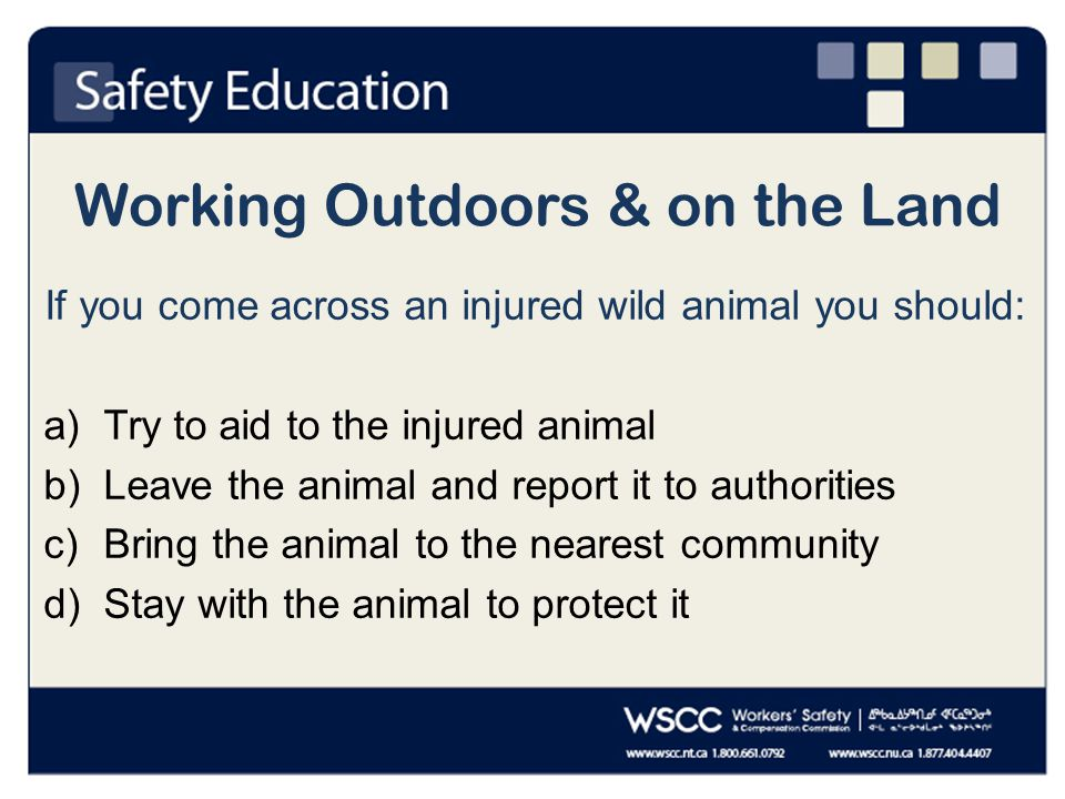 Working Outdoors & on the Land If you come across an injured wild animal you should: a)Try to aid to the injured animal b)Leave the animal and report it to authorities c)Bring the animal to the nearest community d)Stay with the animal to protect it