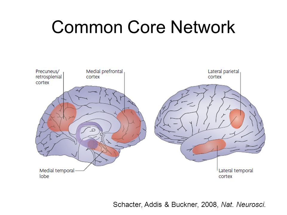Common Core Network Schacter, Addis & Buckner, 2008, Nat. Neurosci.