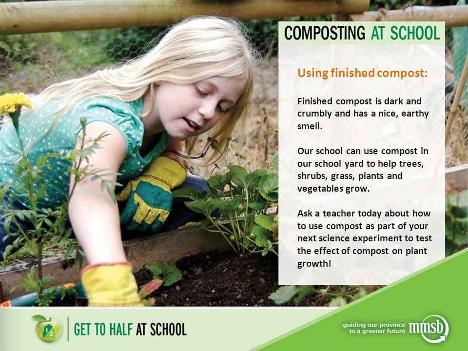 Using finished compost: Finished compost is dark and crumbly and has a nice, earthy smell. Our school can use compost in our school yard to help trees