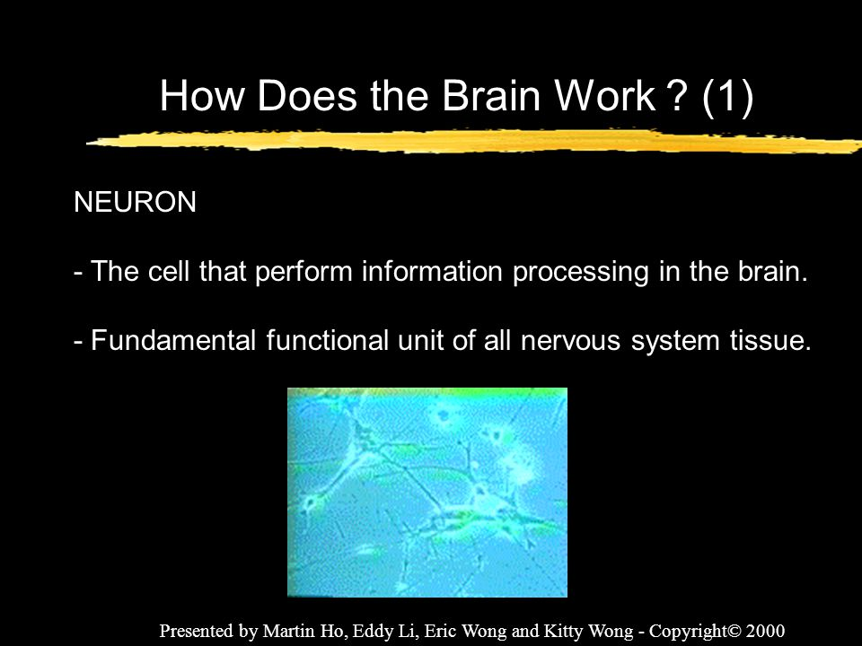 Presented by Martin Ho, Eddy Li, Eric Wong and Kitty Wong - Copyright© 2000 How Does the Brain Work ? (1) NEURON - The cell that perform information p