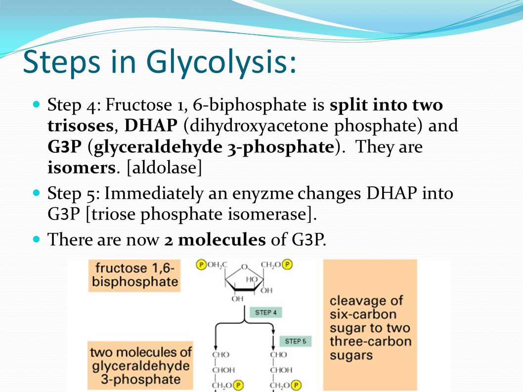 Steps in Glycolysis: Step 4: Fructose 1, 6-biphosphate is split into two trisoses, DHAP (dihydroxyacetone phosphate) and G3P (glyceraldehyde 3-phosphate).