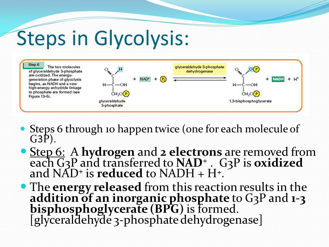 Steps in Glycolysis: Steps 6 through 10 happen twice (one for each molecule of G3P).