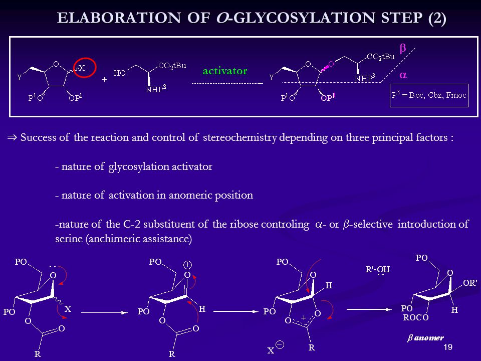 19 ⇒ Success of the reaction and control of stereochemistry depending on three principal factors : - nature of glycosylation activator - nature of activation in anomeric position -nature of the C-2 substituent of the ribose controling  - or  -selective introduction of serine (anchimeric assistance) activator   ELABORATION OF O-GLYCOSYLATION STEP (2)