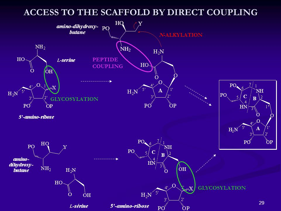 29 ACCESS TO THE SCAFFOLD BY DIRECT COUPLING GLYCOSYLATION N-ALKYLATION PEPTIDE COUPLING GLYCOSYLATION NH 2 PO amino-dihydroxy- butane HO Y