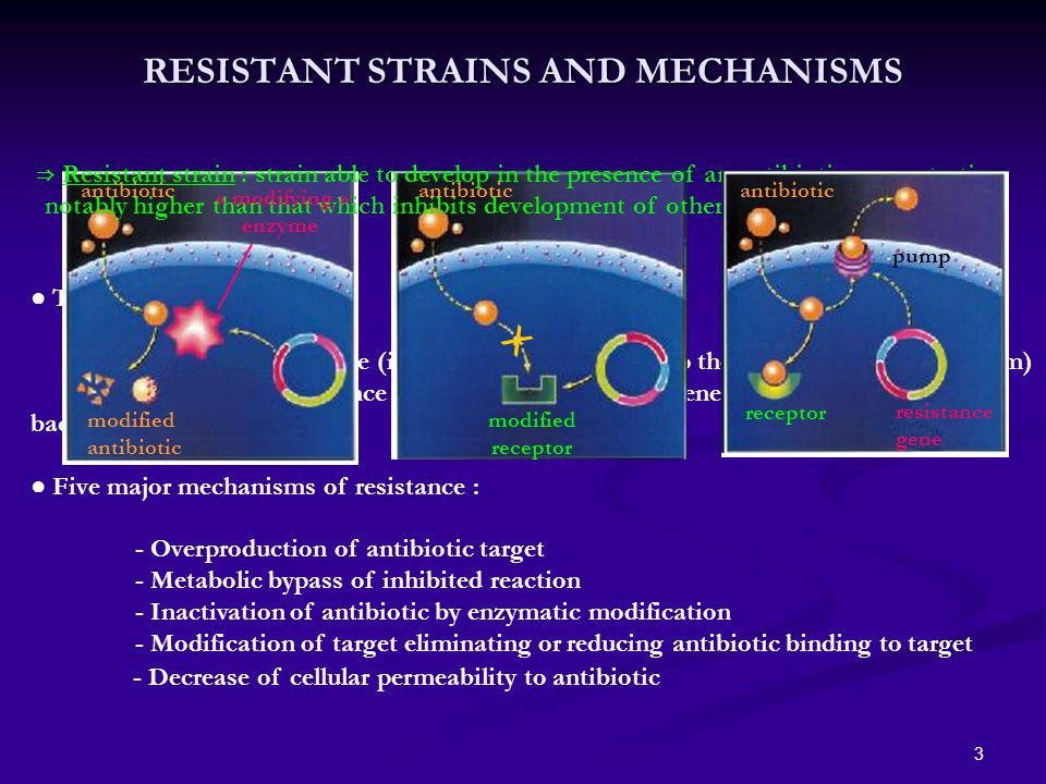 3 ● Two types of resistance : ► Natural resistance (intrinsic property related to the bacterial genetic program) ► Acquired resistance (property resulting from genetic modifications of the bacterial cells) ● Five major mechanisms of resistance : - Overproduction of antibiotic target - Metabolic bypass of inhibited reaction - Inactivation of antibiotic by enzymatic modification - Modification of target eliminating or reducing antibiotic binding to target RESISTANT STRAINS AND MECHANISMS ⇒ Resistant strain : strain able to develop in the presence of an antibiotic concentration notably higher than that which inhibits development of other strains of same species antibiotic « modifying » enzyme modified antibiotic X modified receptor antibiotic receptor resistance gene pump - Decrease of cellular permeability to antibiotic