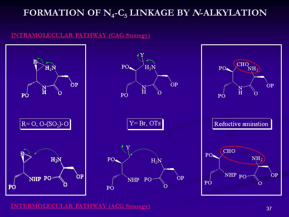 37 FORMATION OF N 4 -C 5 LINKAGE BY N-ALKYLATION INTRAMOLECULAR PATHWAY (CAG Strategy) INTERMOLECULAR PATHWAY (ACG Strategy)