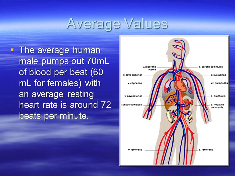 Average Values  The average human male pumps out 70mL of blood per beat (60 mL for females) with an average resting heart rate is around 72 beats per