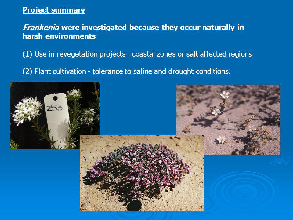 Project summary Frankenia were investigated because they occur naturally in harsh environments (1) Use in revegetation projects - coastal zones or salt affected regions (2) Plant cultivation - tolerance to saline and drought conditions.