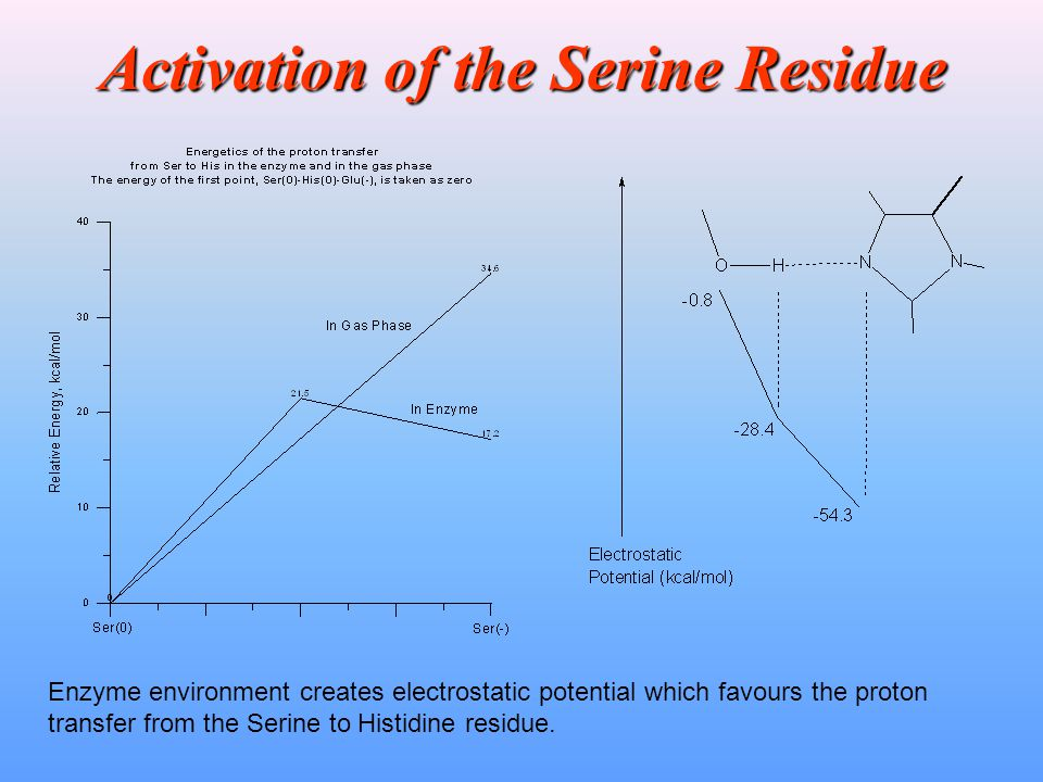 Activation of the Serine Residue Enzyme environment creates electrostatic potential which favours the proton transfer from the Serine to Histidine res