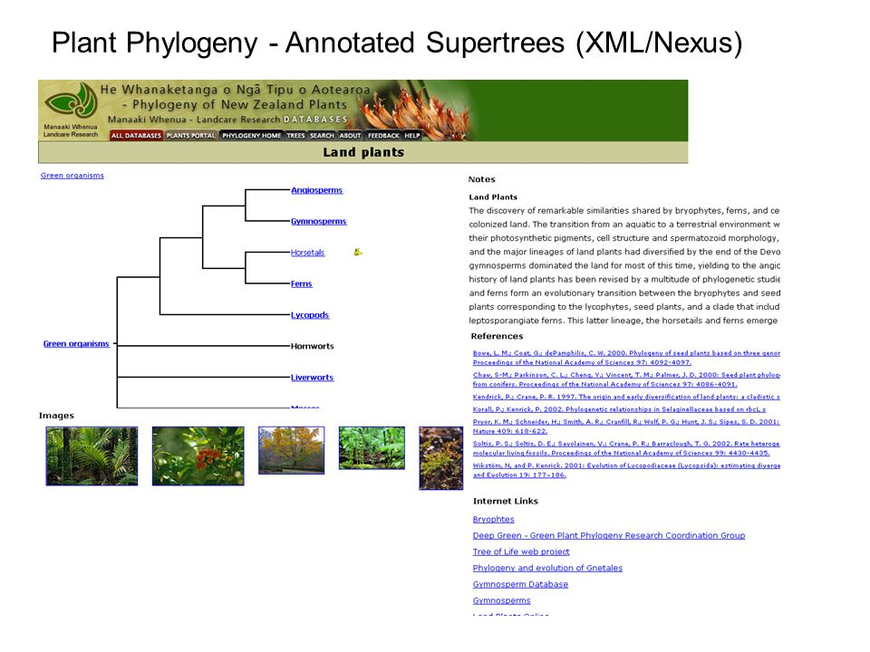 Plant Phylogeny - Annotated Supertrees (XML/Nexus)