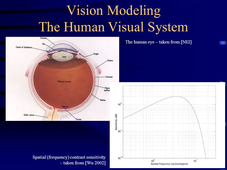 Vision Modeling The Human Visual System The human eye – taken from [NEI] Spatial (frequency) contrast sensitivity – taken from [Wu 2002]