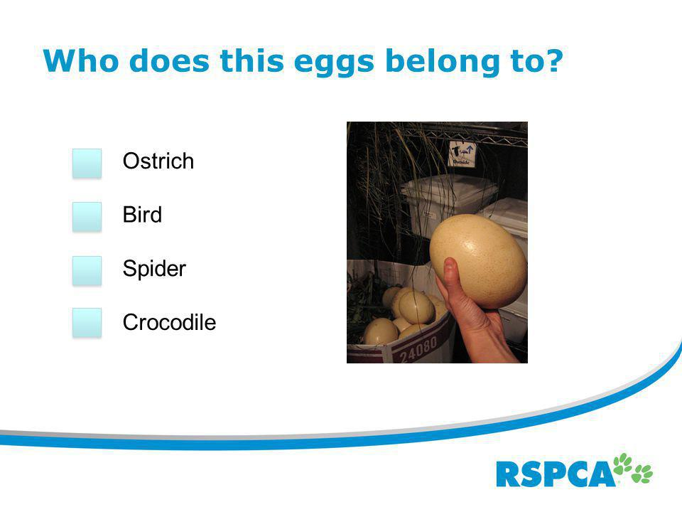Introduction Welcome to the 'whose egg is this' quiz.