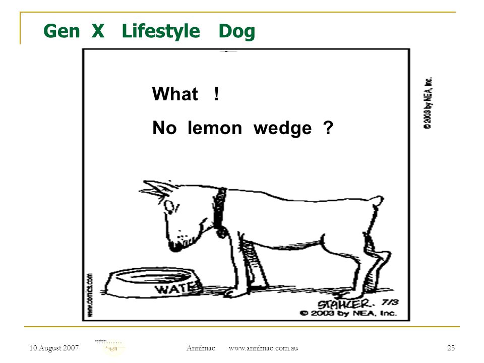 10 August 2007 Annimac www.annimac.com.au 25 Gen X Lifestyle Dog What ! No lemon wedge