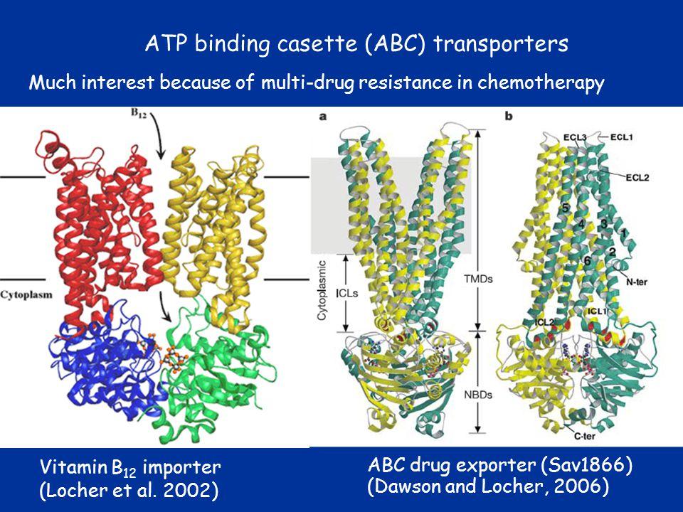 ATP binding casette (ABC) transporters ABC drug exporter (Sav1866) (Dawson and Locher, 2006) Vitamin B 12 importer (Locher et al. 2002) Much interest