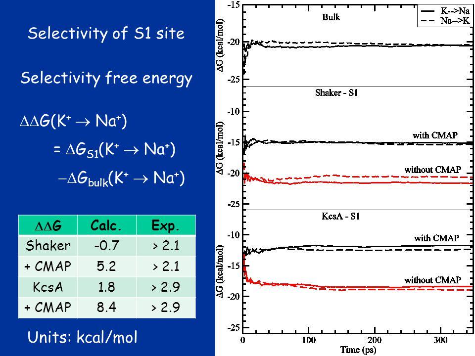 Selectivity of S1 site Selectivity free energy  G(K +  Na + ) =  G S1 (K +  Na + )  G bulk (K +  Na + )  GCalc.Exp.