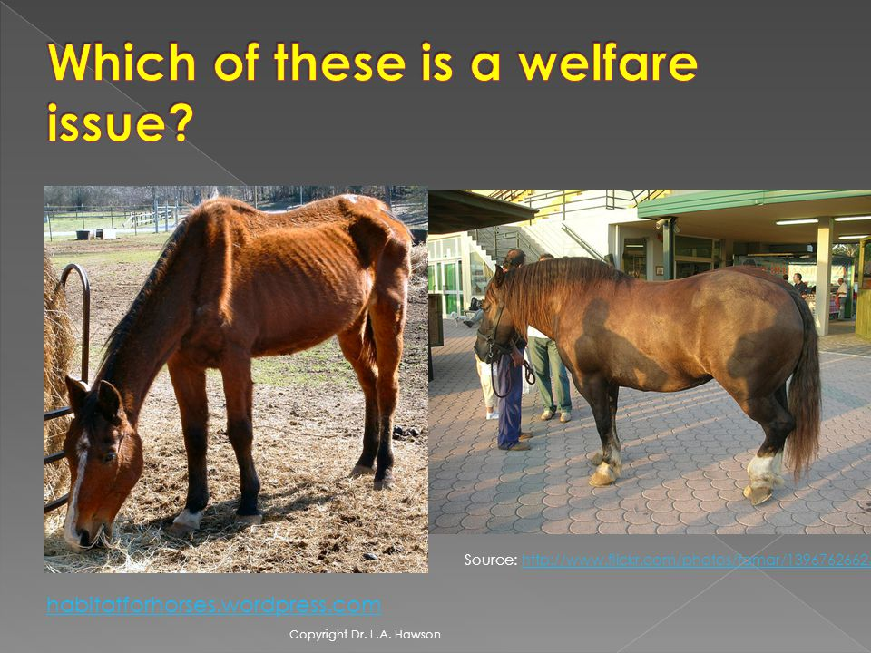 Source: http://www.flickr.com/photos/famar/1396762662/http://www.flickr.com/photos/famar/1396762662/ habitatforhorses.wordpress.com Copyright Dr.