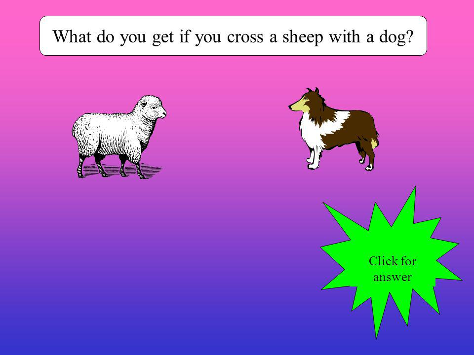 What do you get if you cross a sheep with a dog? Click for answer