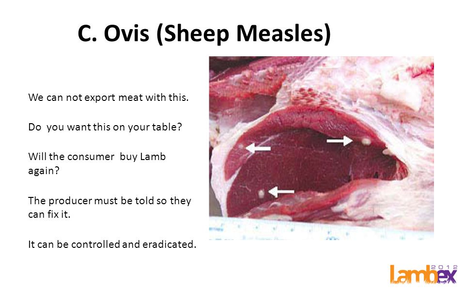 C. Ovis (Sheep Measles) We can not export meat with this.