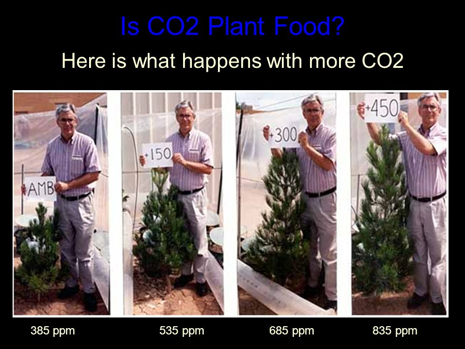 Is CO2 Plant Food Here is what happens with more CO2 385 ppm 535 ppm 685 ppm 835 ppm