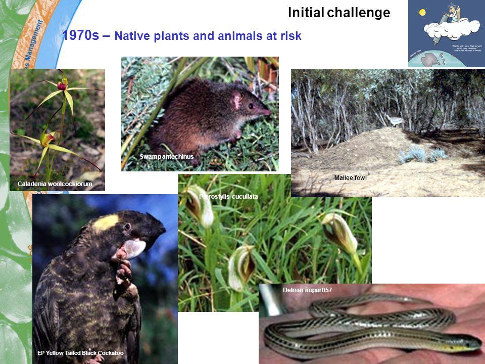 1970s – Native plants and animals at risk Pterostylis cucullata Delmar impar057 Swamp antechinus Caladenia woolcockiorum EP Yellow Tailed Black Cockatoo Mallee fowl