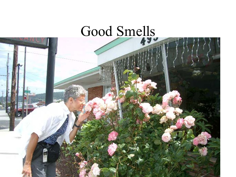 Can you identify the smell in the containers?