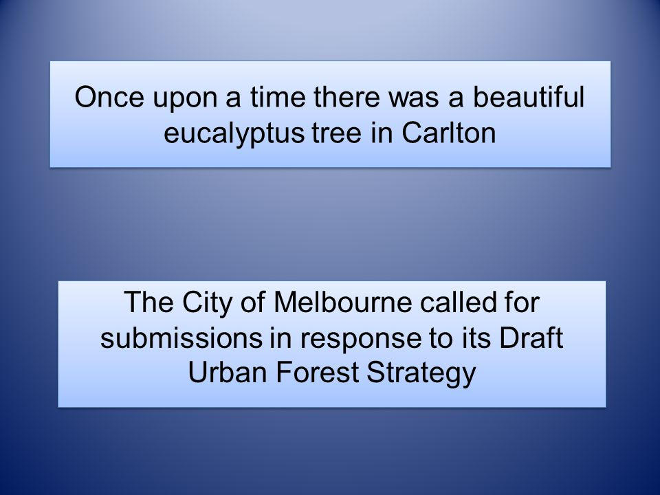 Once upon a time there was a beautiful eucalyptus tree in Carlton The City of Melbourne called for submissions in response to its Draft Urban Forest S